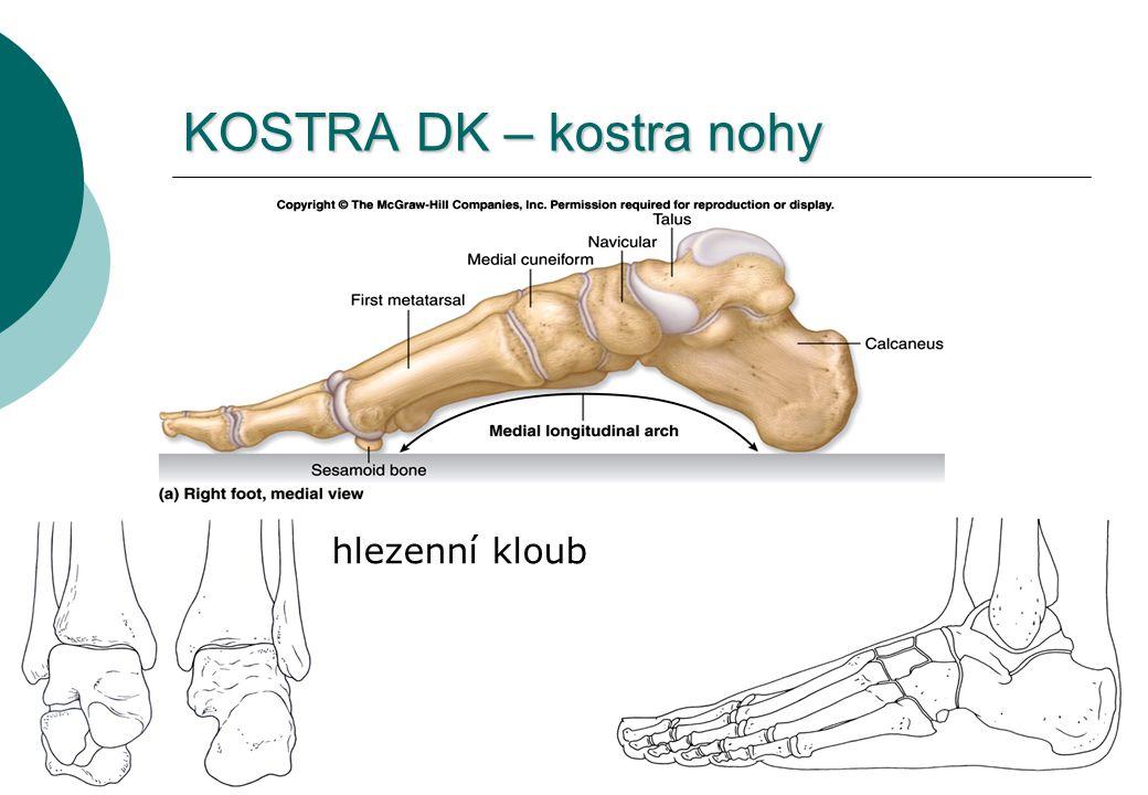 KOSTRA DK – kostra nohy hlezenní kloub