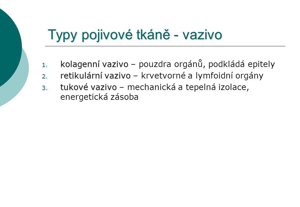 Typy pojivové tkáně - vazivo