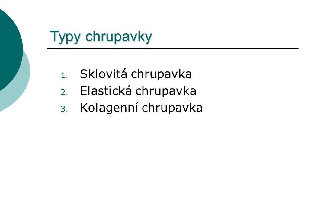 Typy chrupavky Sklovitá chrupavka Elastická chrupavka