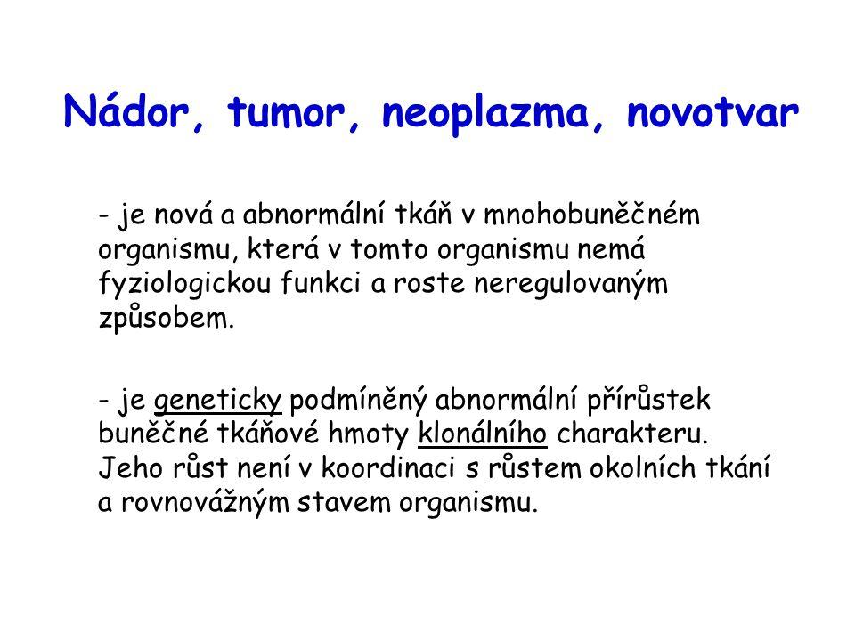 Nádor, tumor, neoplazma, novotvar