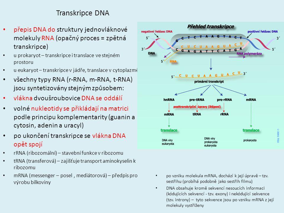 Transkripce DNA přepis DNA do struktury jednovláknové molekuly RNA (opačný proces = zpětná transkripce)
