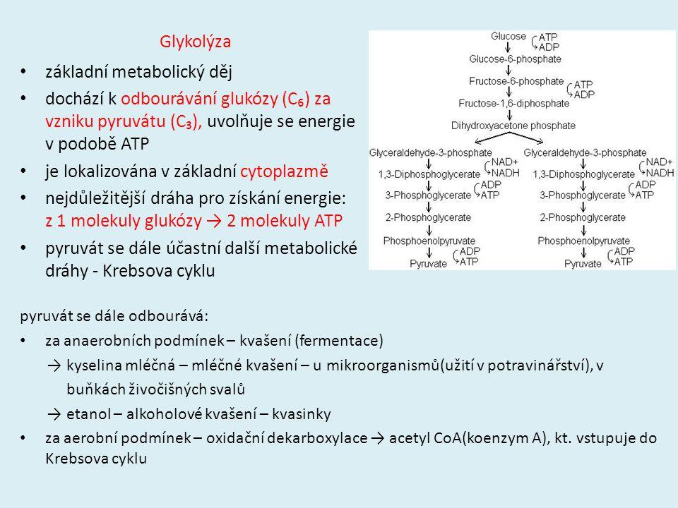 základní metabolický děj