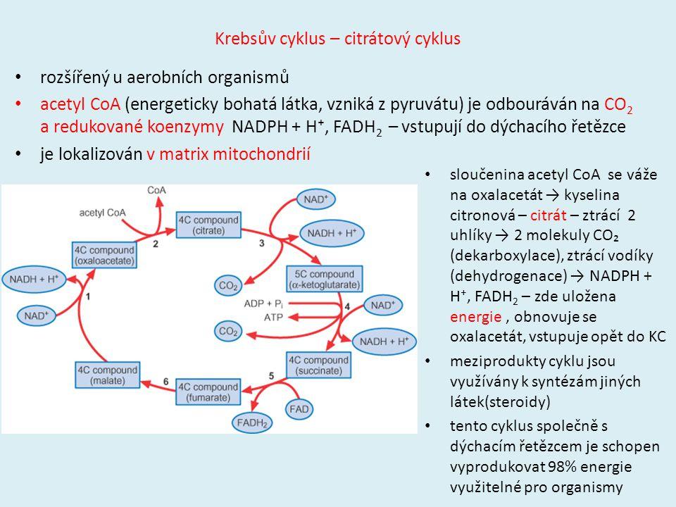 Krebsův cyklus – citrátový cyklus