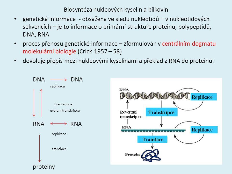 Biosyntéza nukleových kyselin a bílkovin