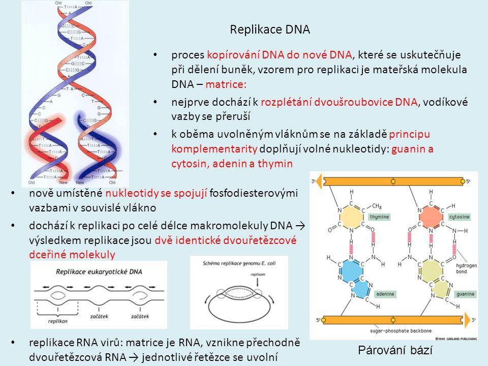 Replikace DNA proces kopírování DNA do nové DNA, které se uskutečňuje při dělení buněk, vzorem pro replikaci je mateřská molekula DNA – matrice: