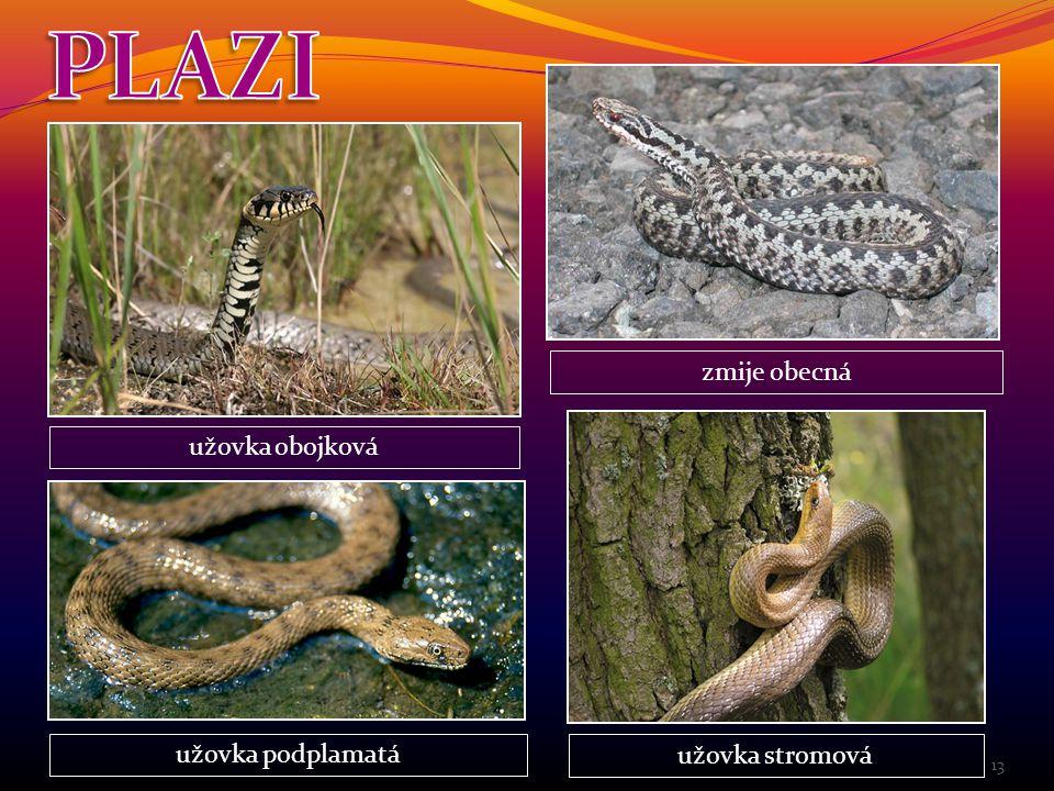 PLAZI zmije obecná užovka obojková užovka podplamatá užovka stromová