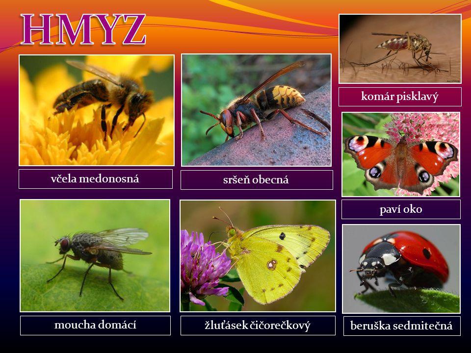 HMYZ komár pisklavý včela medonosná sršeň obecná paví oko