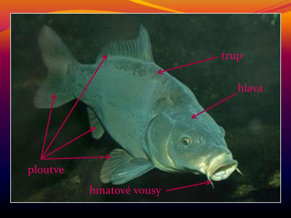 ÚKOL: Popište části těl ryb, obojživelníků, plazů, ptáků, savců a hmyzu podle obrázků.