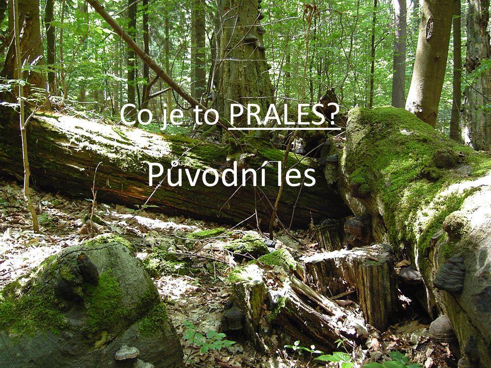Co je to PRALES Původní les