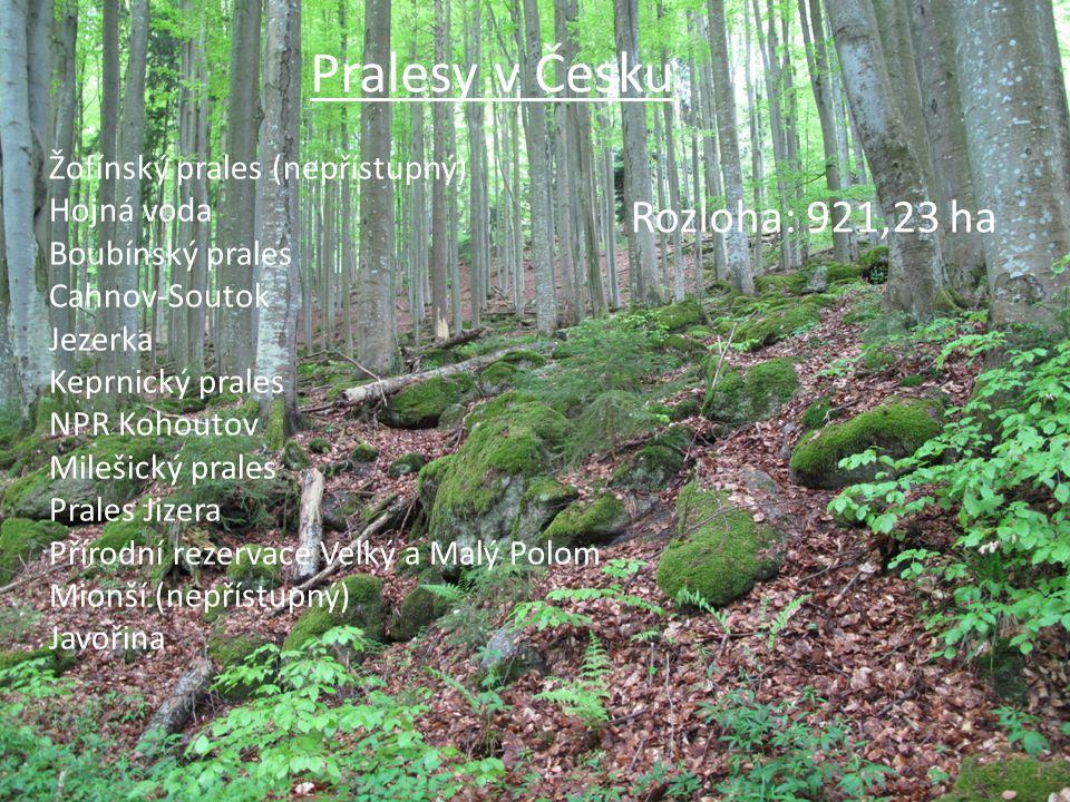 Pralesy v Česku Rozloha: 921,23 ha Žofínský prales (nepřístupný)