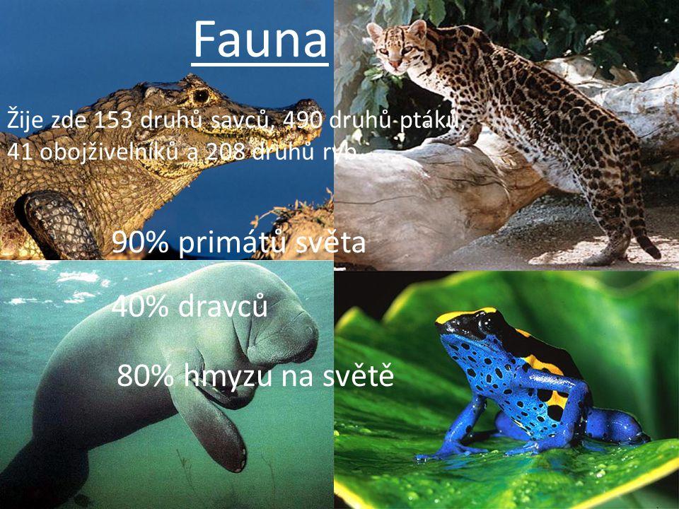 Fauna 90% primátů světa 40% dravců 80% hmyzu na světě