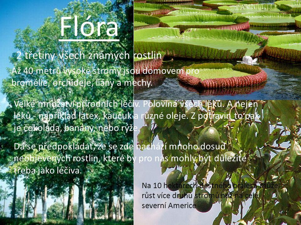 Flóra 2 třetiny všech známých rostlin