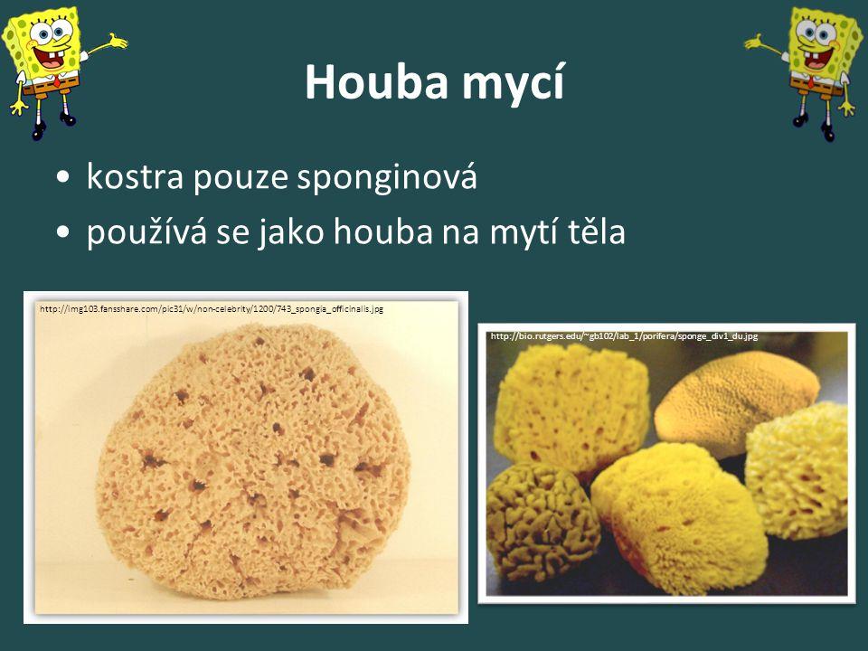 Houba mycí kostra pouze sponginová používá se jako houba na mytí těla