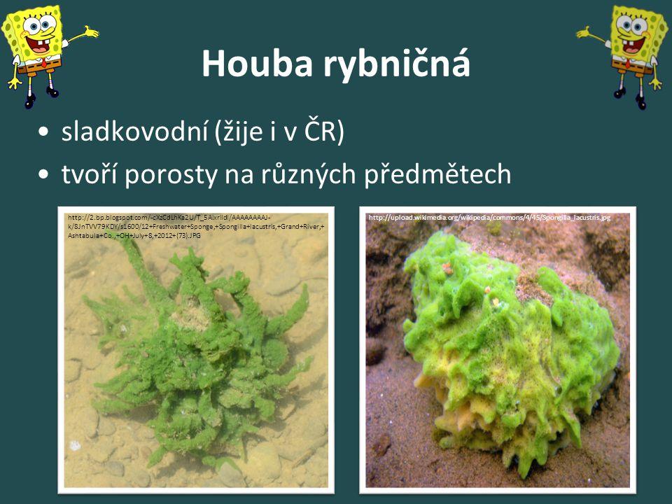 Houba rybničná sladkovodní (žije i v ČR)