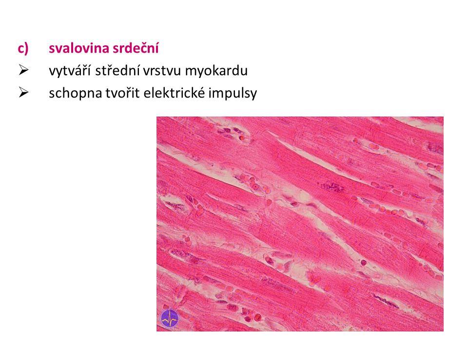 svalovina srdeční vytváří střední vrstvu myokardu schopna tvořit elektrické impulsy
