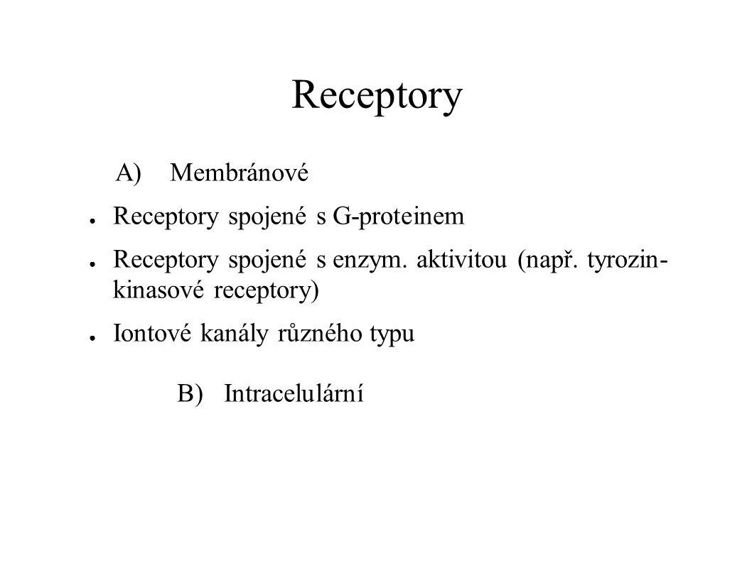 Receptory A) Membránové Receptory spojené s G-proteinem