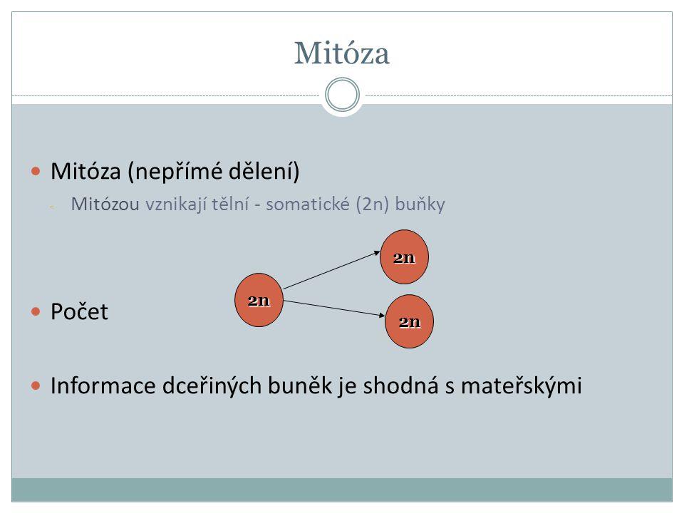 Mitóza Mitóza (nepřímé dělení) Počet