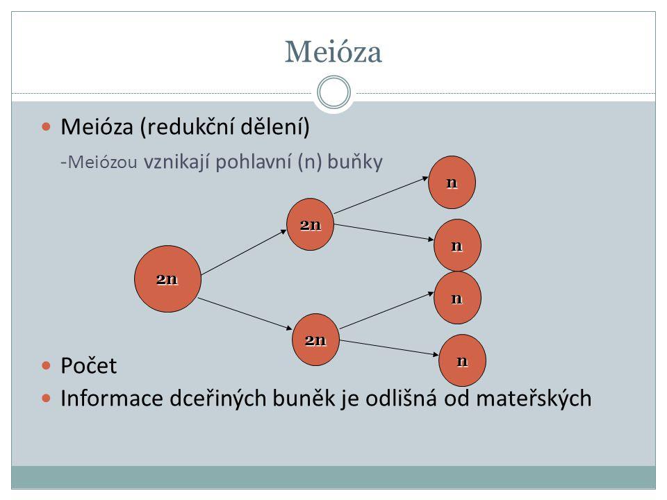 Meióza -Meiózou vznikají pohlavní (n) buňky Meióza (redukční dělení)