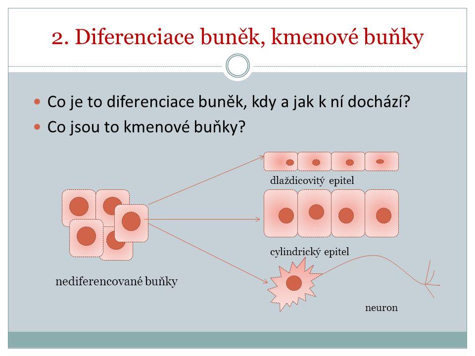 2. Diferenciace buněk, kmenové buňky