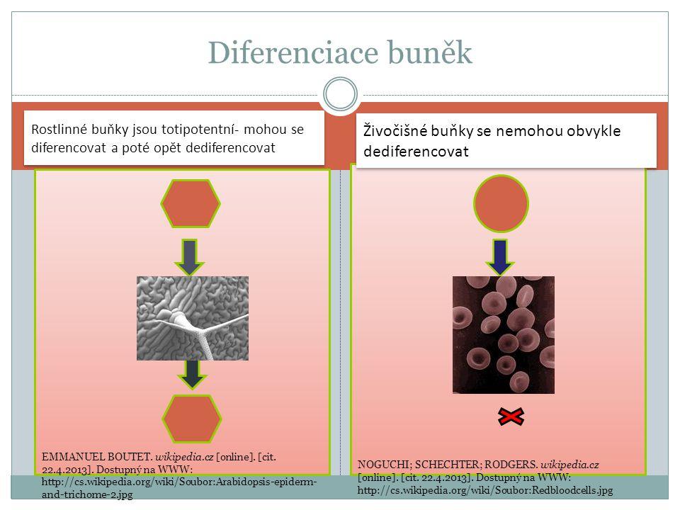 Diferenciace buněk Živočišné buňky se nemohou obvykle dediferencovat