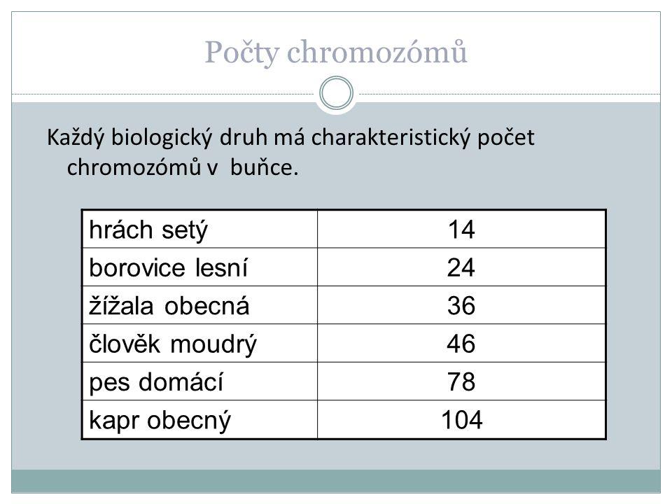Počty chromozómů hrách setý 14 borovice lesní 24 žížala obecná 36