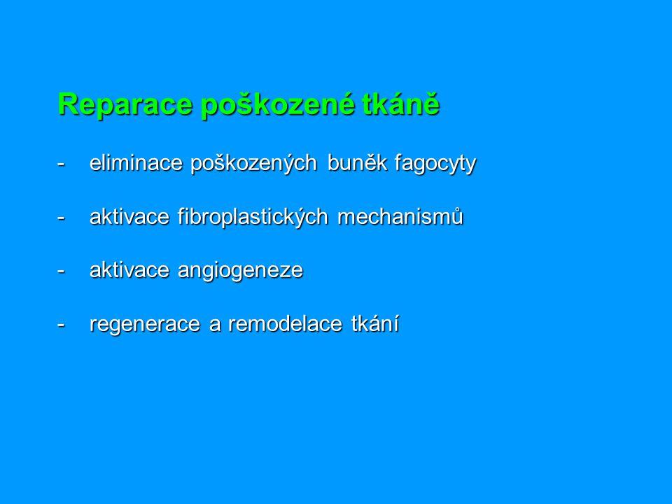 Reparace poškozené tkáně - eliminace poškozených buněk fagocyty - aktivace fibroplastických mechanismů - aktivace angiogeneze - regenerace a remodelace tkání