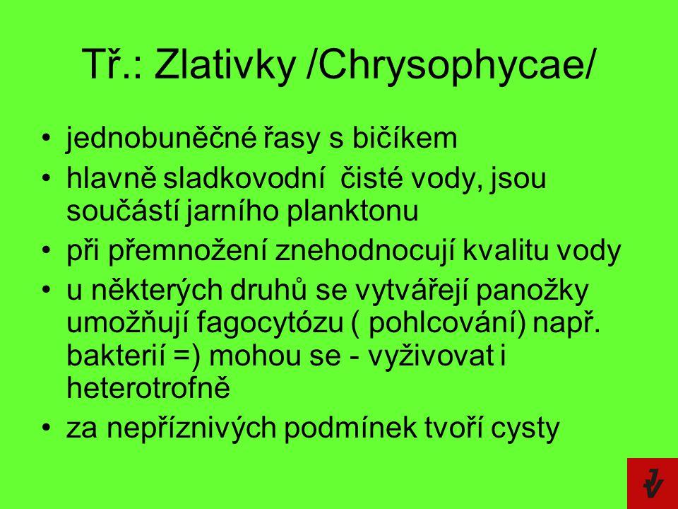 Tř.: Zlativky /Chrysophycae/