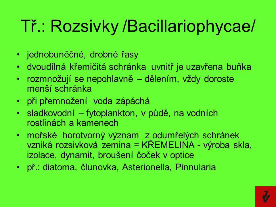 Tř.: Rozsivky /Bacillariophycae/