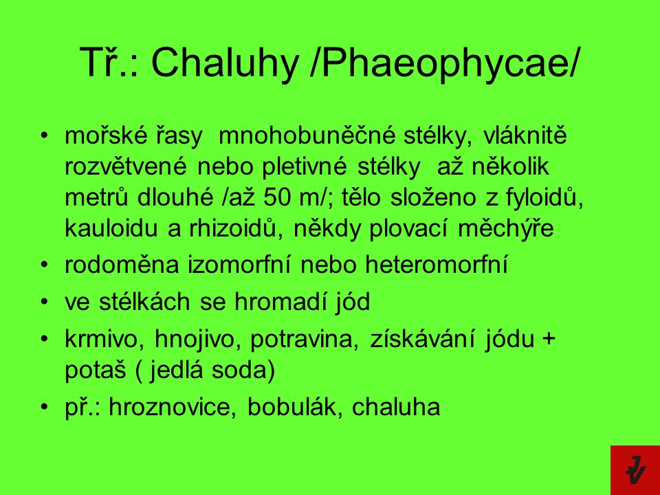 Tř.: Chaluhy /Phaeophycae/