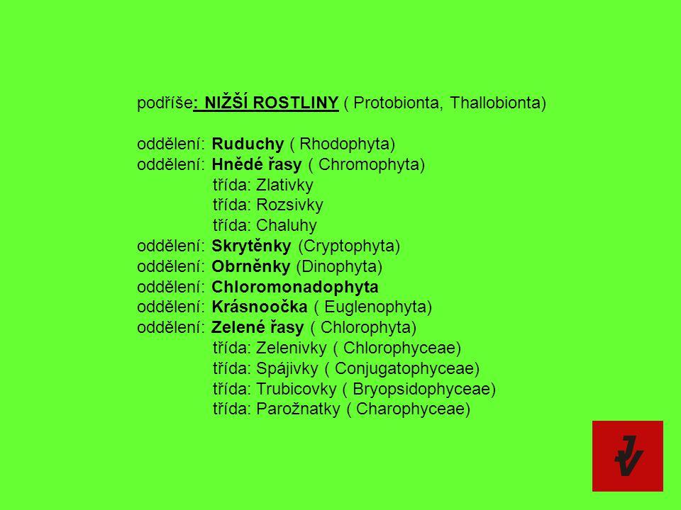 podříše: NIŽŠÍ ROSTLINY ( Protobionta, Thallobionta)