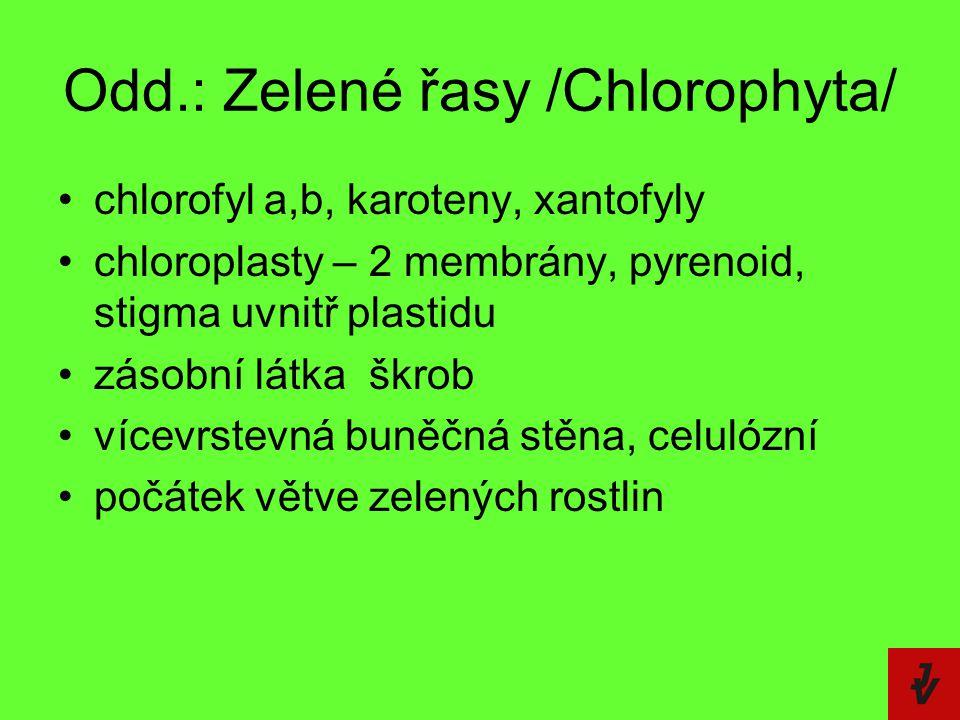 Odd.: Zelené řasy /Chlorophyta/