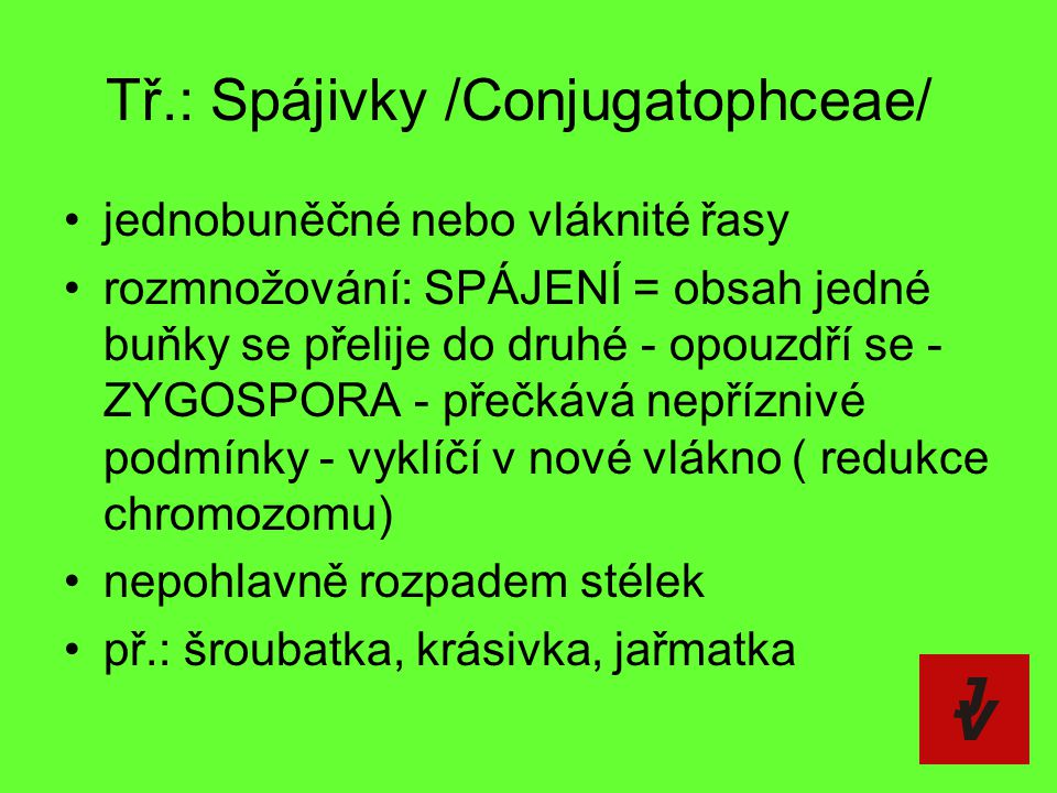 Tř.: Spájivky /Conjugatophceae/