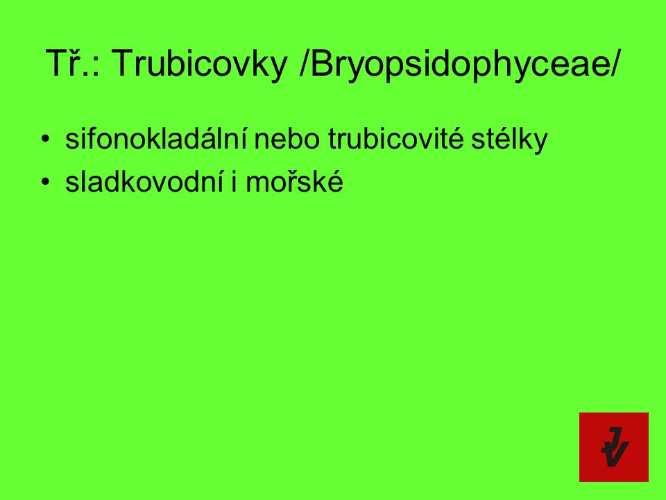 Tř.: Trubicovky /Bryopsidophyceae/