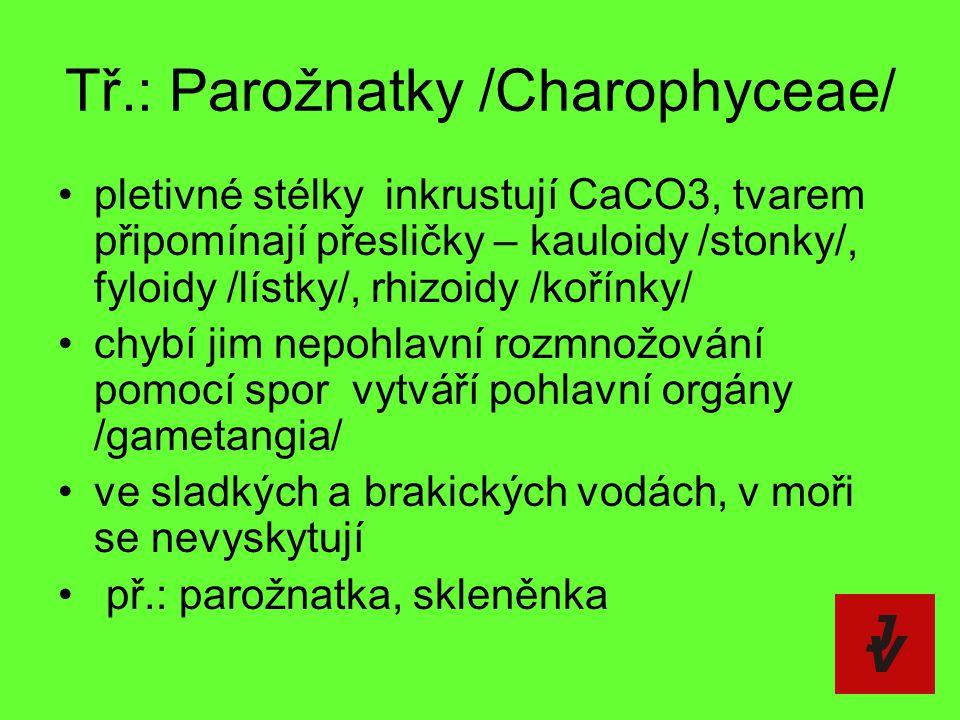 Tř.: Parožnatky /Charophyceae/