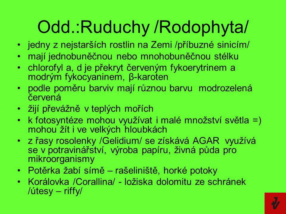 Odd.:Ruduchy /Rodophyta/