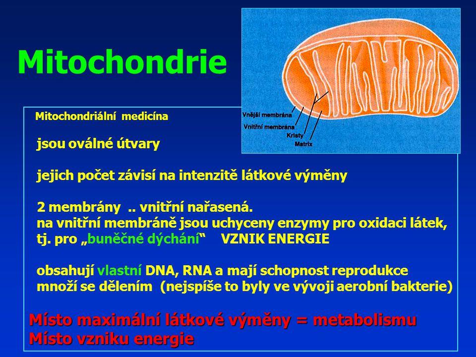 Mitochondrie Místo maximální látkové výměny = metabolismu