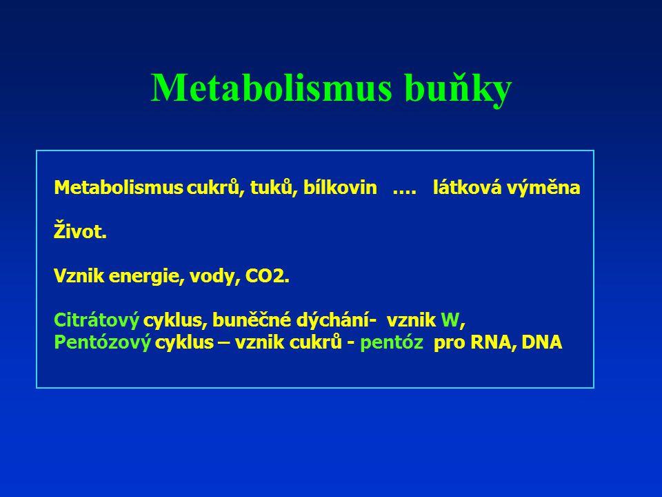Metabolismus buňky Metabolismus cukrů, tuků, bílkovin …. látková výměna. Život. Vznik energie, vody, CO2.