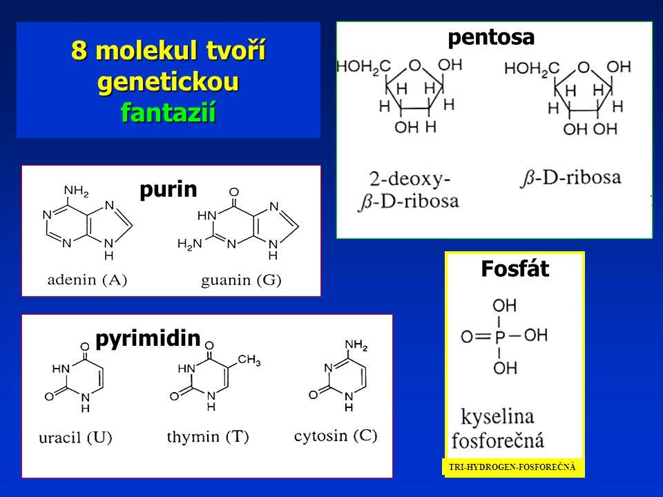 8 molekul tvoří genetickou fantazií