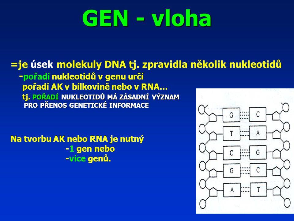 GEN - vloha =je úsek molekuly DNA tj. zpravidla několik nukleotidů