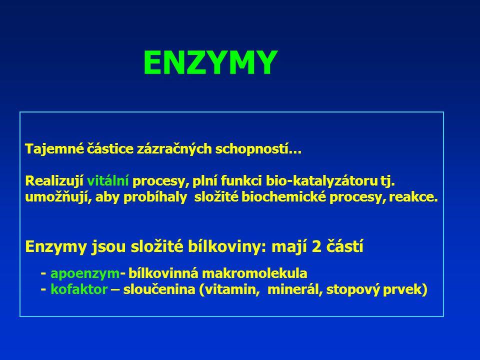ENZYMY Enzymy jsou složité bílkoviny: mají 2 částí
