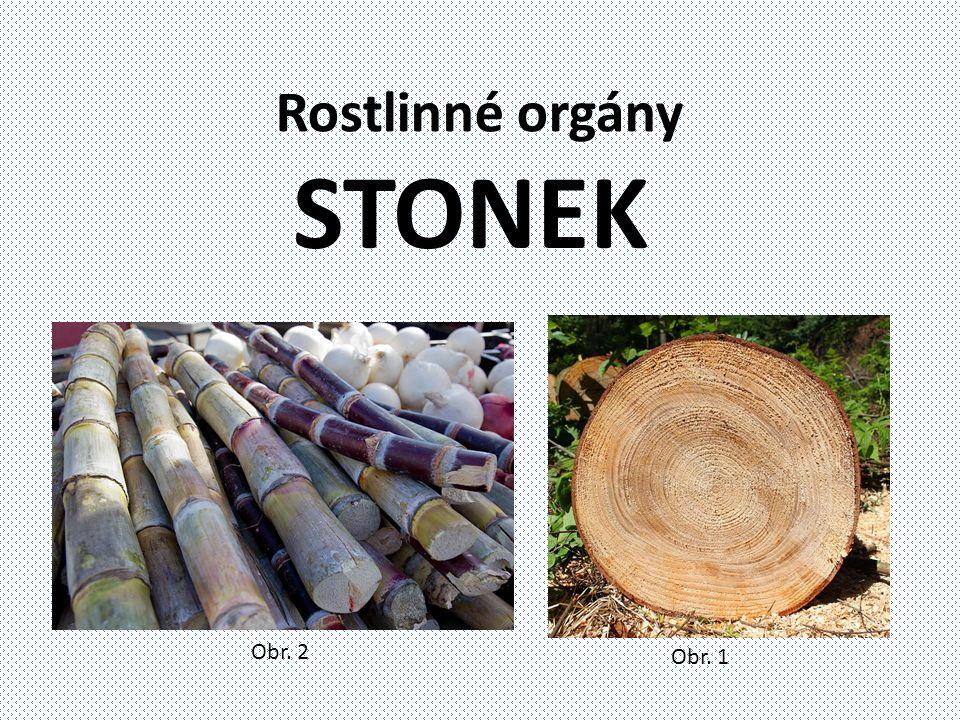 Rostlinné orgány STONEK Obr. 2 Obr. 1