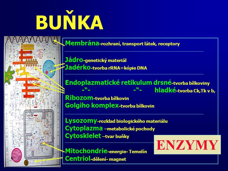 BUŇKA ENZYMY Membrána-rozhraní, transport látek, receptory