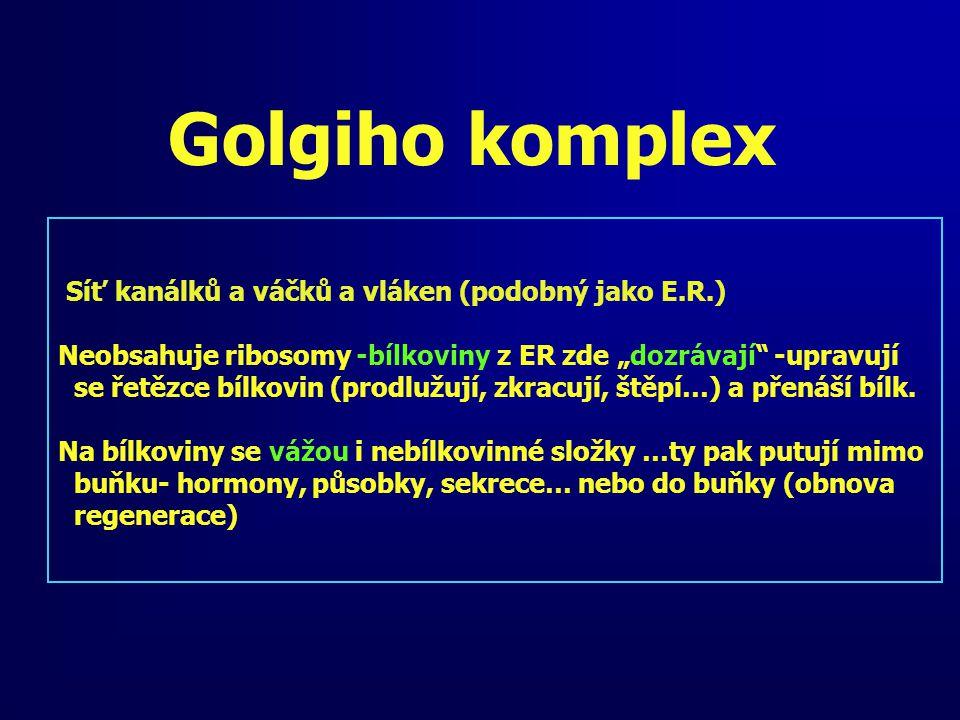 Golgiho komplex Síť kanálků a váčků a vláken (podobný jako E.R.)