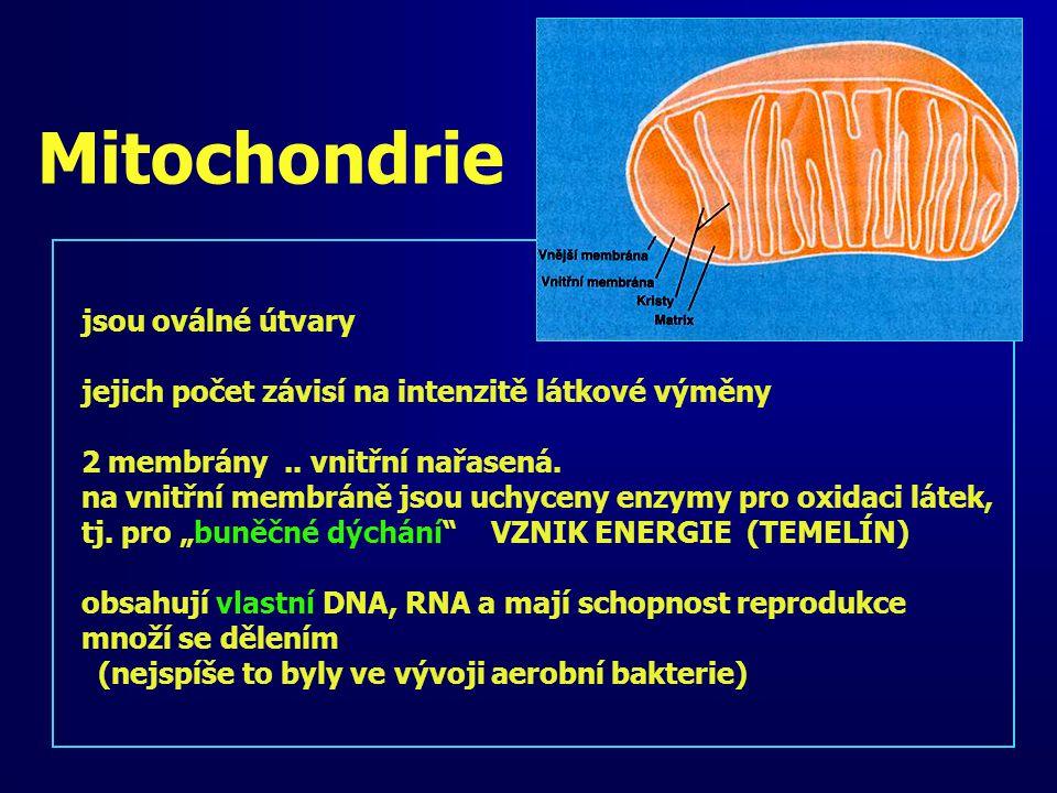 Mitochondrie jsou oválné útvary