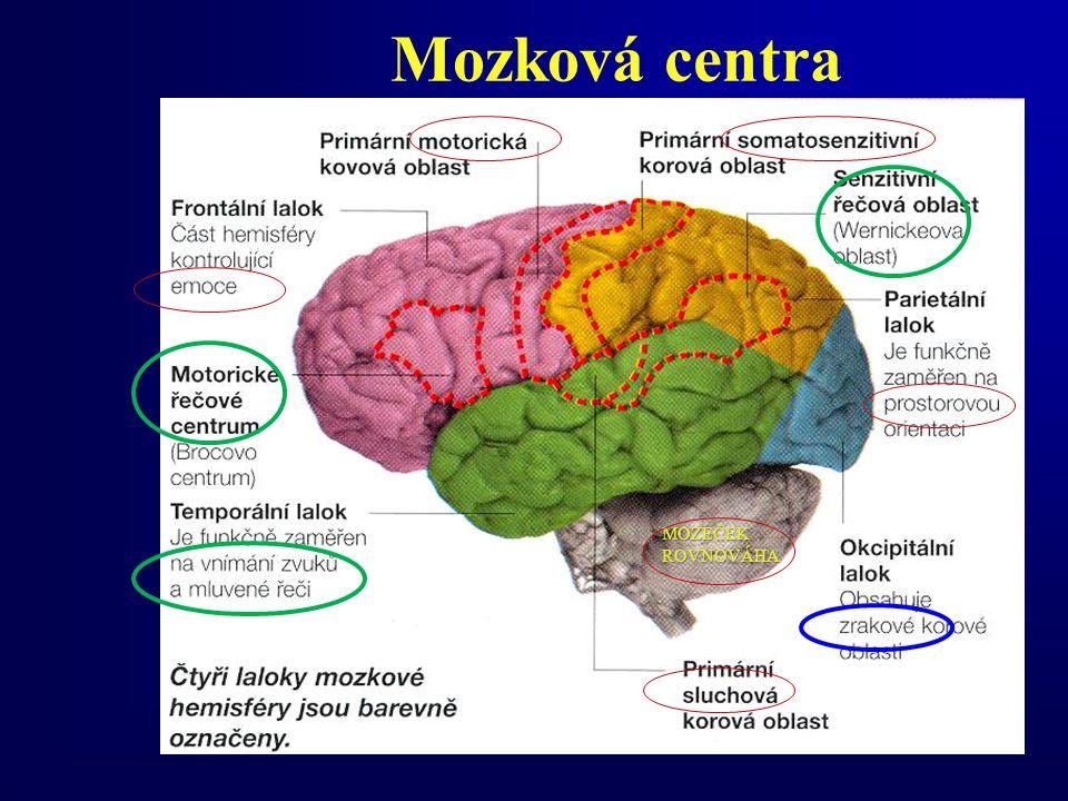Mozková centra MOZEČEK ROVNOVÁHA