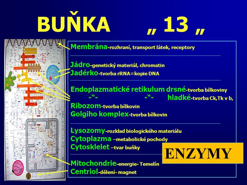"""BUŇKA """" 13 """" ENZYMY Membrána-rozhraní, transport látek, receptory"""