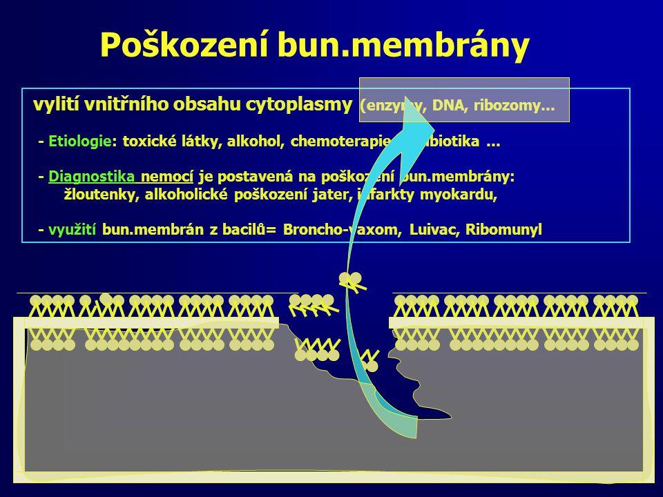 Poškození bun.membrány