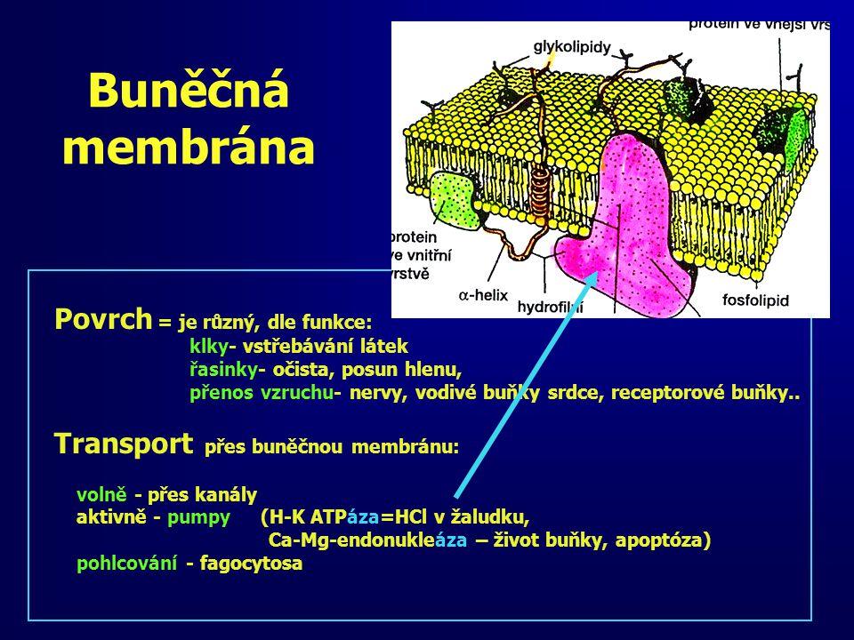 Buněčná membrána Povrch = je různý, dle funkce: