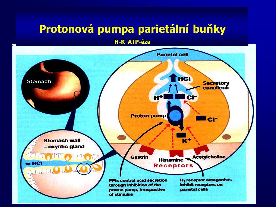 Protonová pumpa parietální buňky