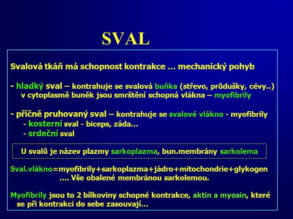 SVAL Svalová tkáň má schopnost kontrakce … mechanický pohyb